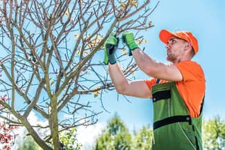 San Antonio arborist pruning tree